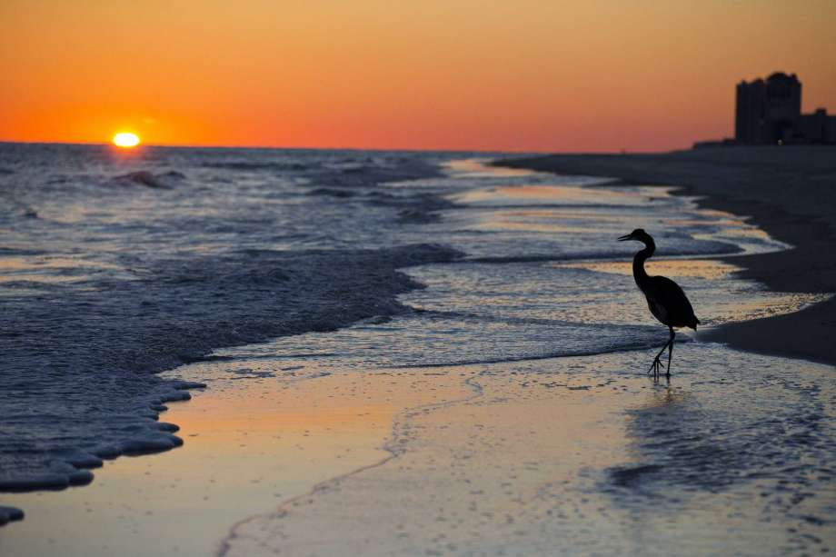 FILE - In this Nov. 19, 2014, record photo, a blue heron walks along a beach during nightfall in Orange Beach, Ala. The second annual National Plan for Vacation Day is Jan. 30. The transport attention hopes Americans will use a day to report their vacations for a year and take advantage of any paid time off they are entitled to from their jobs. Photo: Brynn Anderson, AP / Copyright 2018 The Associated Press. All rights reserved.